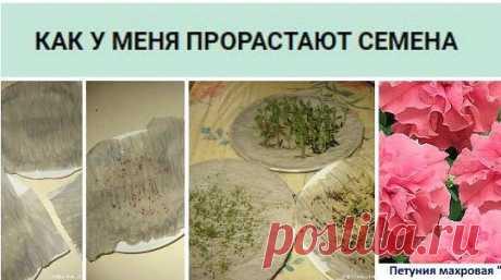 О проращивании семян