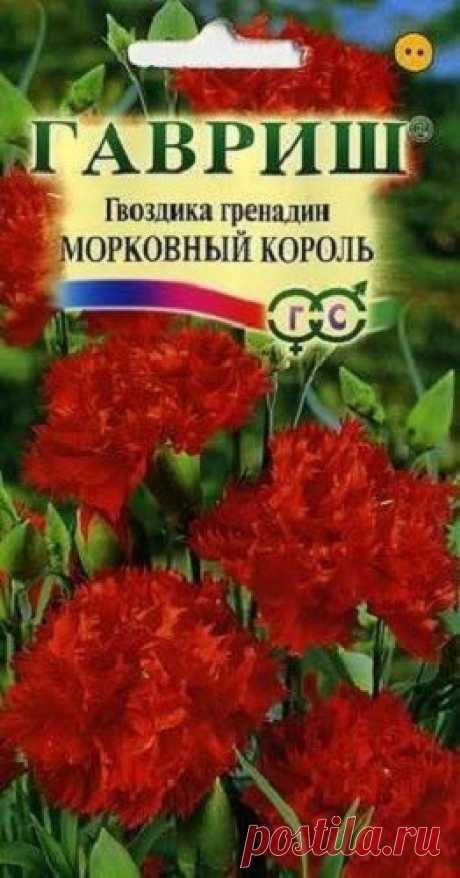 """Гвоздика садовая гренадин """"Морковный король"""""""