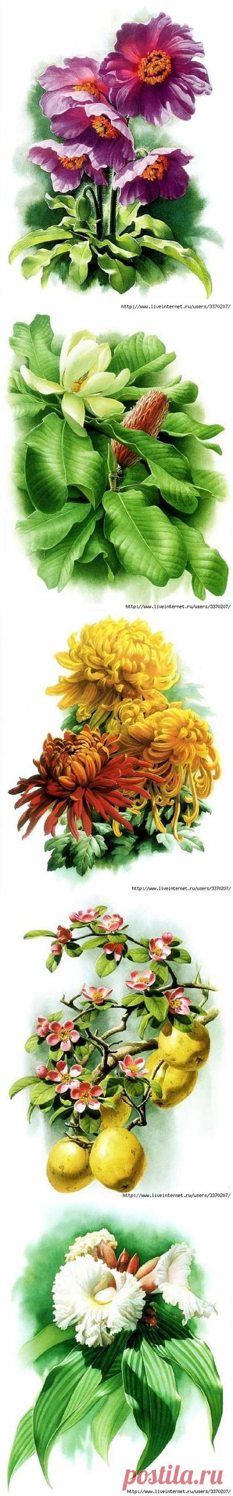 Цветы от Zeng Xiao Lian 2 часть..