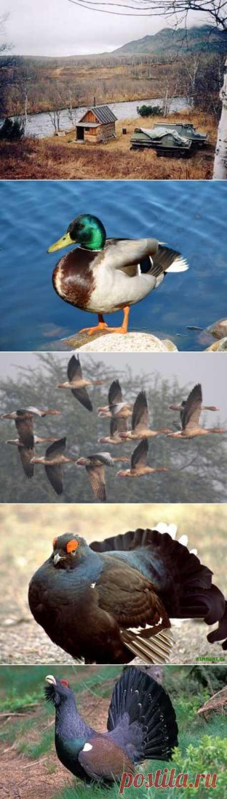 Сезон охоты на различную дичь, как охотиться в летом зимой и весной