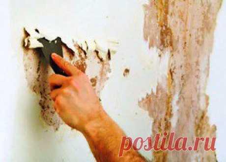 Чем обработать стены от плесени: 4 самых эффективных способа