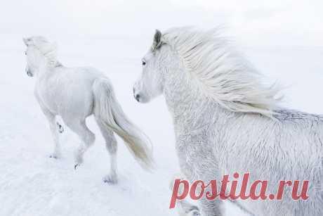 Благородные животные и суровый ландшафт: серия Дрю Доггетта — Российское фото