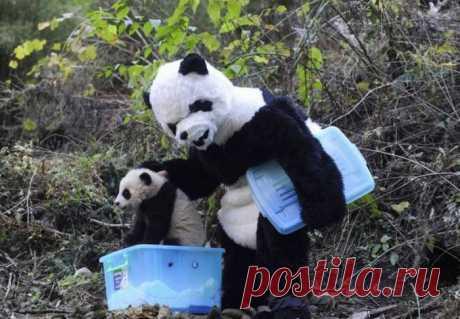 (+1) тема - Причуды Китая | Отдыхаем с юмором