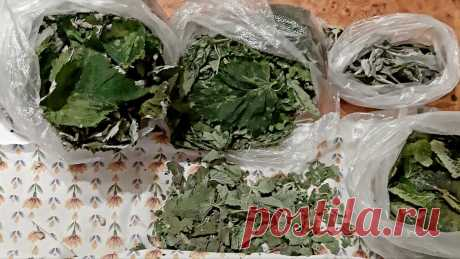 Как ферментировать листья смородины, малины, вишни в домашних условиях   Реальный огород   Яндекс Дзен