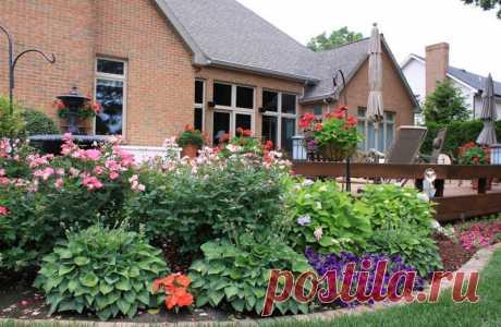 Шикарные клумбы с хостами Ничто так не украшает участок, как обилие зелени и цветов. Многие растения требуют тщательного ухода, да и высадить сотни цветков не так уж легко. Поэтому ландшафтные дизайнеры предпочитают оформлять клумбы огромными растениями, которые будут выглядеть стильно, необычно и экзотично. Хоста — любимица многих садоводов.