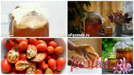 Вырастить чайный гриб: 2 лучших рецепта