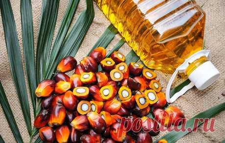 Вредное ли пальмовое масло для здоровья? Вот ответ! - Полезные советы красоты