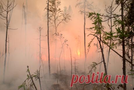 Эти люди спасают российский лес: репортаж из горящей тайги: Общество: Россия: Lenta.ru
