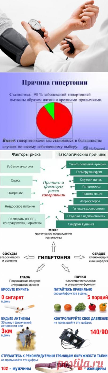Гипертония: как распознать и лечить болезнь?   Кладовая здоровья   Яндекс Дзен