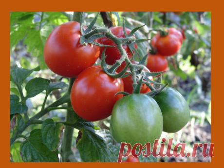 Проверенный годами рецепт, который превзойдет все ожидания для увеличения урожая | Дача, дом, работа | Яндекс Дзен