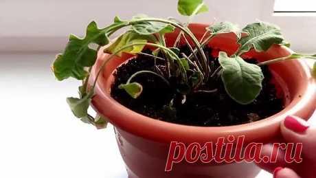 2 простых трюка для здоровья комнатных растений!