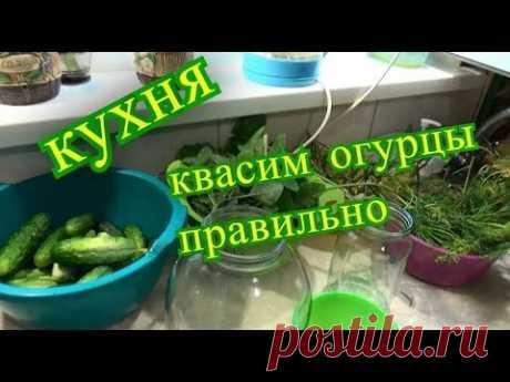 кухня, квасим огурцы правильно, влог шаповаловы коля оля