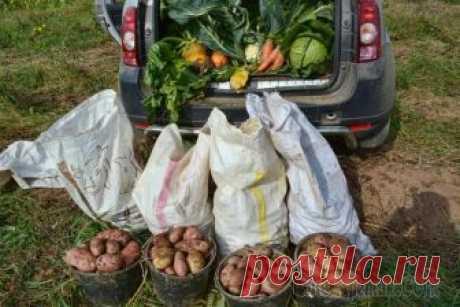 """Как спасти урожай от погодных катаклизмов: 4 стратегии для любой погоды Лето – пора долгожданная, но в последнее время приносящая огородникам те еще """"сюрпризы"""". Что делать, если растения страдают от холода и переувлажнения? Как спасти овощи, побитые градом или замученные ..."""