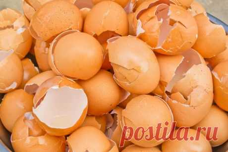 Необычное использование яичной скорлупы: 4 способа в быту