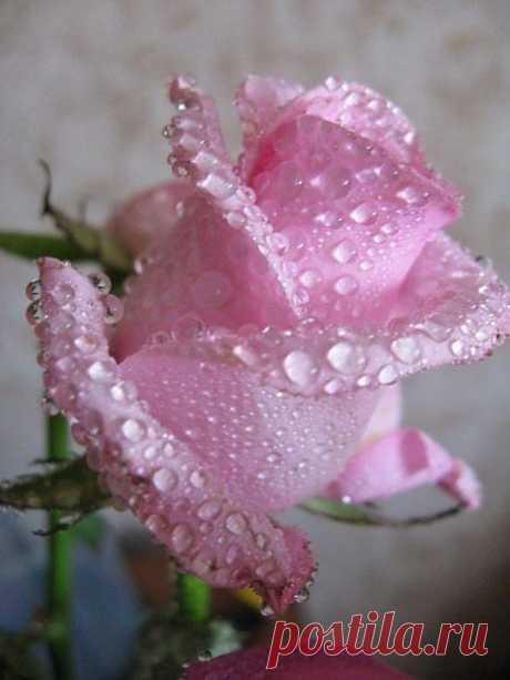 ...Нарисуй мне, художник, Этот дождь за окном, Эти блёклые краски Уходящего лета. Нарисуй мне, художник, Молодое вино, Что искрится в бокале Изумрудного цвета. Нарисуй мне на память Полевые цветы, Что приветливо смотрят Голубыми глазами. Нарисуй мне, художник, Воскрешенье мечты, Что не смыть, не ослабить Никакими слезами