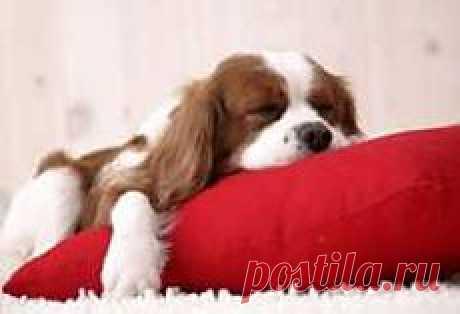 Красная подушка для привлечения денег. Как улучшить материальное положение. - Психологический портал За белым кроликом