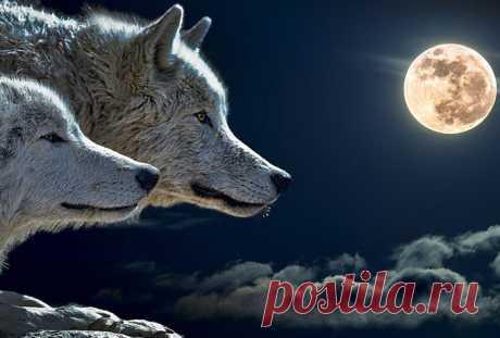 В ночь на 11 мая будет полнолуние Волка. Не пропустите важный вечер перед этим явлением!