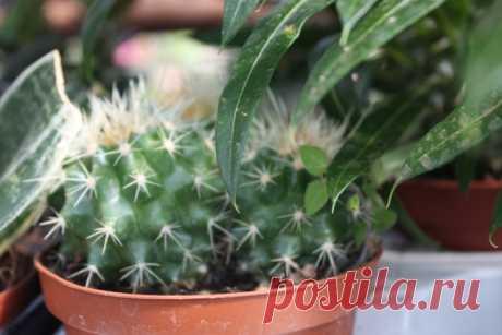 Полезны ли кактусы? - Садоводка