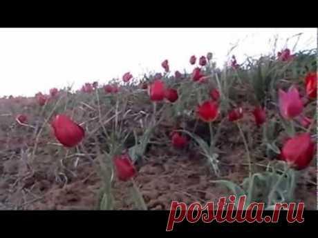 Цветущая волгоградская степь
