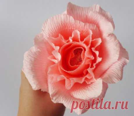 Roses from a crepe paper step by step. | FROM PAPER the HANDS
