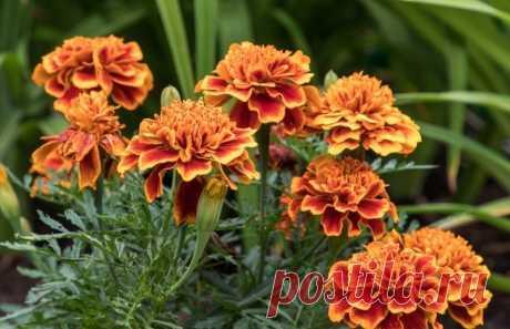 Растения, которые сажают осенью для хорошего урожая