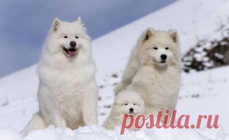 Факты о популярных породах собак / Питомцы