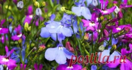 Цветник и ландшафт. Декоративные растения и дизайн - Ботаничка.ru