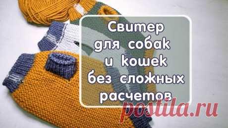 Модные Чихуашечки (вязание для животных, схемы)