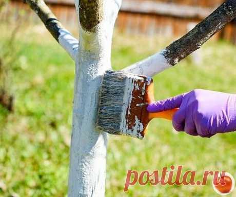 Как и зачем белят деревья осенью? Готовим отличную побелку самостоятельно | ГРЯДКИ ВПОРЯДКЕ | Яндекс Дзен