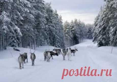 Сегодня 02 декабря в народном календаре Авдей Радетель