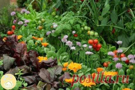Травы для овощей Выбирая соседей по грядке, обратите внимание на семейства овощей. Овощи из семейства капустных, например, хорошо высаживать рядом со свеклой и зелеными листовыми культурами. Некоторые травы помогут отпугнуть вредителей от капусты.  Посаженная на одной грядке с капустой, мята улучшит ее вкус. Овощи могут испытывать не только симпатию, но и антипатию друг к другу: некоторые овощи задерживают рост и уменьшают урожайность друг друга.