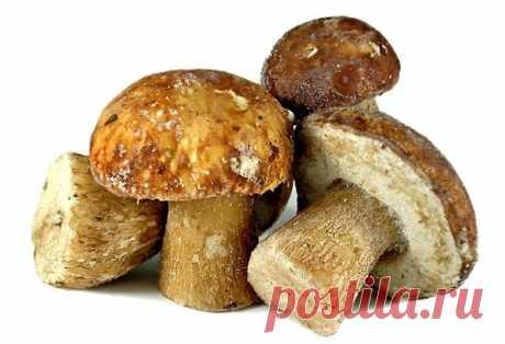 Как заморозить грибы на зиму: 4 важных правила - Кулинарные советы для любителей готовить вкусно - Хозяйке на заметку - Кулинария - IVONA - bigmir)net - IVONA bigmir)net