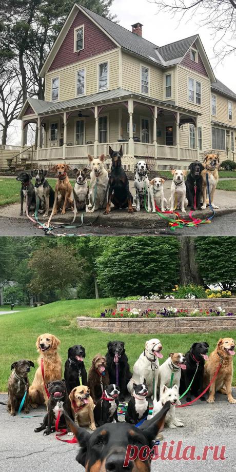 ВНью-Йоркской службе повыгулу собак делают крутейшие групповые фото своих подопечных