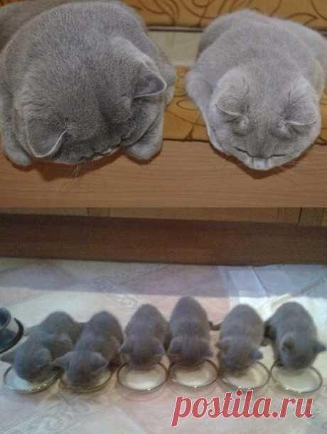 Семейная идиллия #семья #юмор #животные