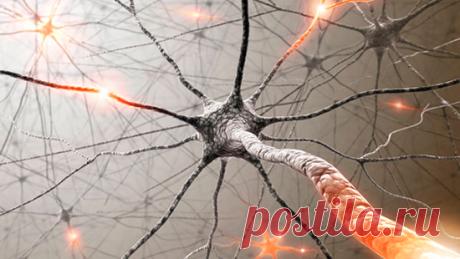 Минуту внимания! 12 правил мозга и конфета для интеллекта