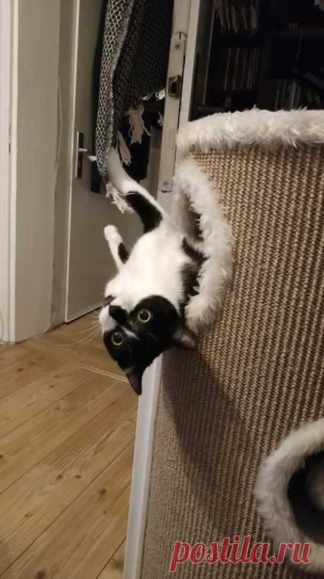 Без кота и жизнь не та / Питомцы