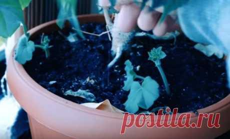 Способ подкормить растения! — Полезные советы
