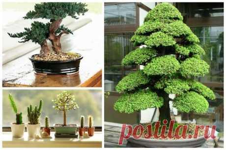 HelpMeGrow: Bonsai For Beginners  |  Pinterest