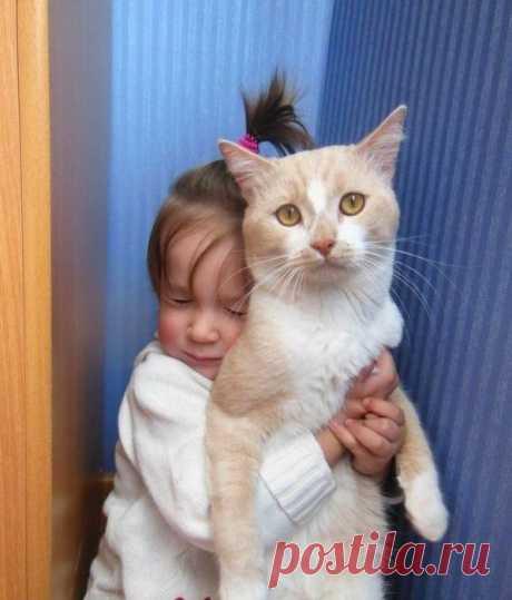 Терпи, котя - это любовь