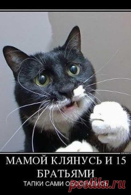 Друзья Фарита Муфтяхетдинова | 9 друзей