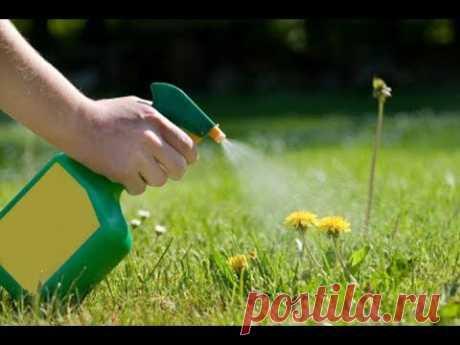 Как сделать средство для уничтожения сорняков