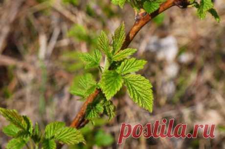 Размножим сами. Как вырастить новые плодовые растения из стеблей и веток