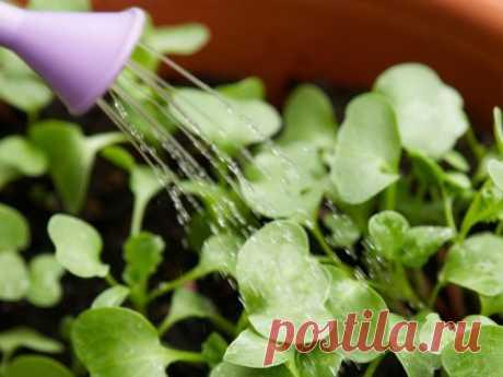 «Эпин» - стимулятор роста растений. Все, что необходимо знать любому дачнику  Любой растительный организм в период роста и развития сталкивается с целым комплексом неблагоприятных факторов, которые снижают иммунитет растений и вызывают различные болезни. Для преодоления всех н…