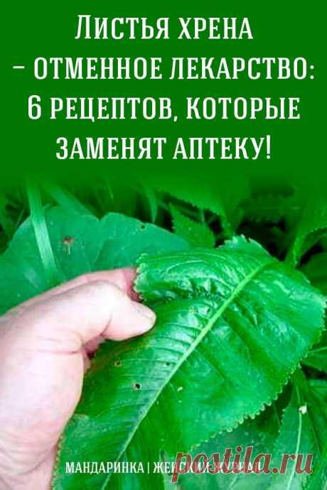 Листья хрена — отменное лекарство: 6 рецептов, которые заменят аптеку! - Я узнаю