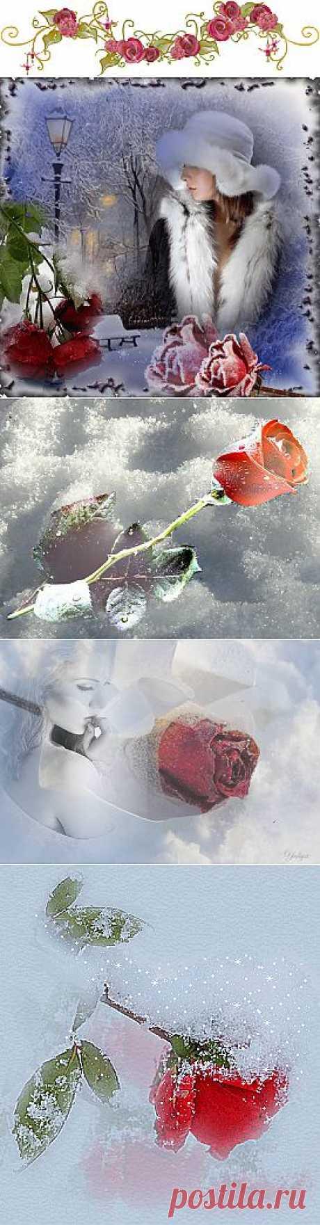 Плейкаст «Лежали розы на снегу...»