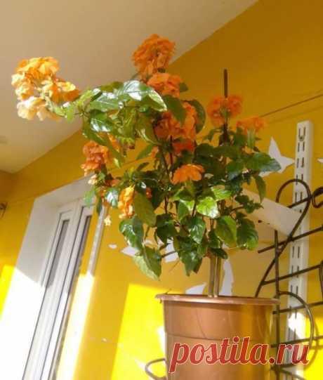 Комнатные растения, которые цветут практически круглый год. Видео!
