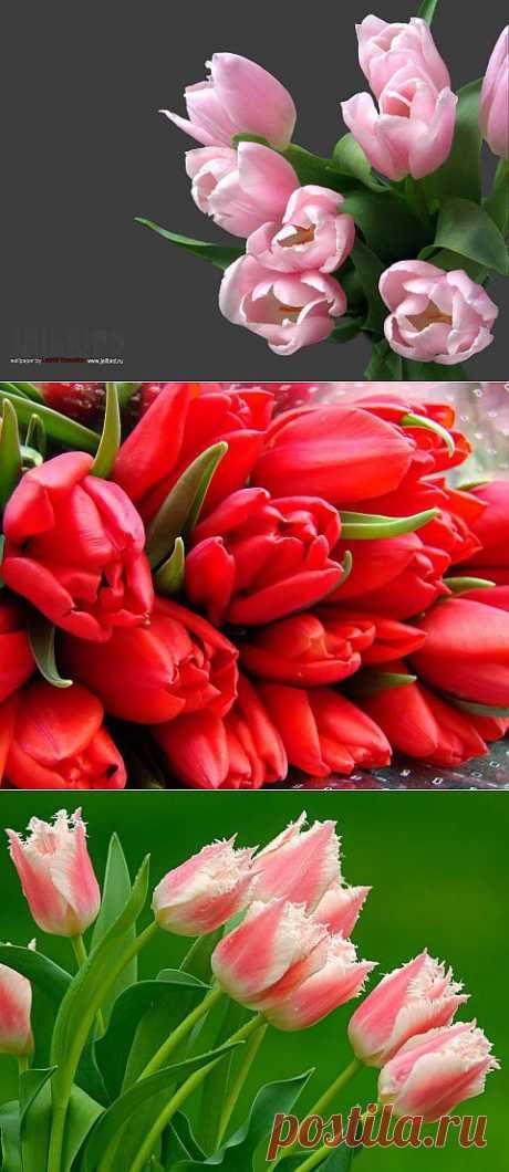 (+1) тема - Как вырастить красивые тюльпаны дома | САД НА ПОДОКОННИКЕ