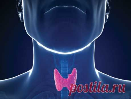 Чем питаться при проблемах с щитовидной железой?   Будь Здоров!   Яндекс Дзен