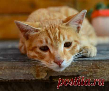 5 ранних признаков гипертиреоза у кошки | Лапа помощи | Яндекс Дзен