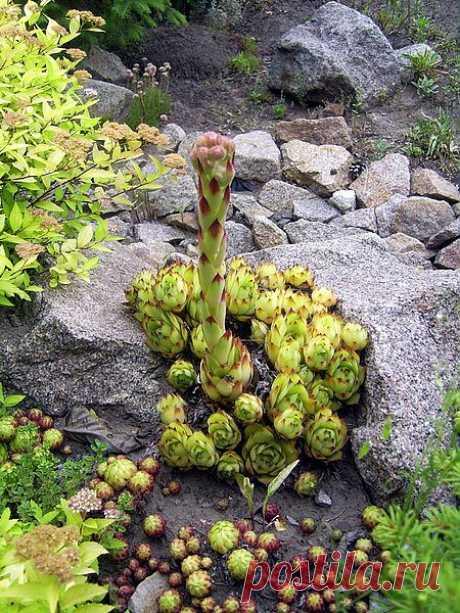 Сухой ручей. Растения для сухого ручья.